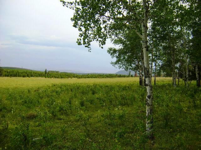 Big Elk Ranch Green