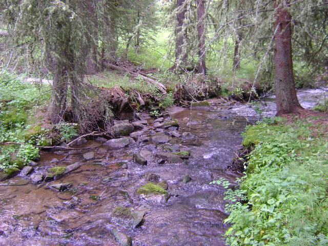 Big Elk Ranch Stream