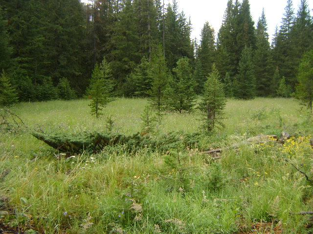 Big Elk Ranch Pasture
