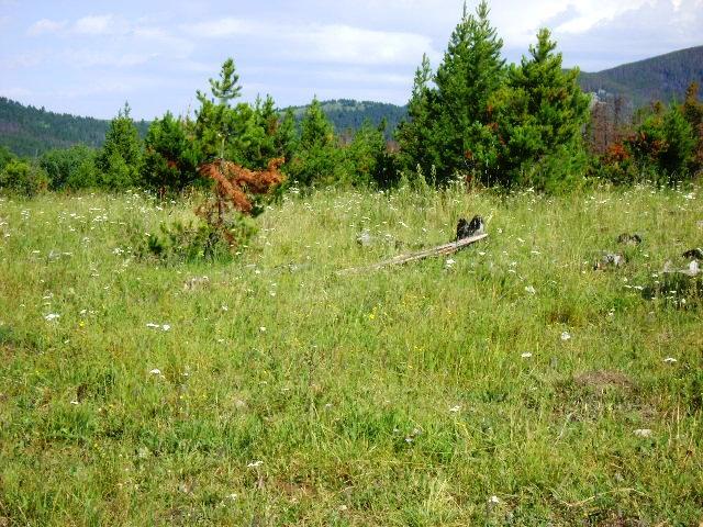 Big Elk Ranch Pasture 2