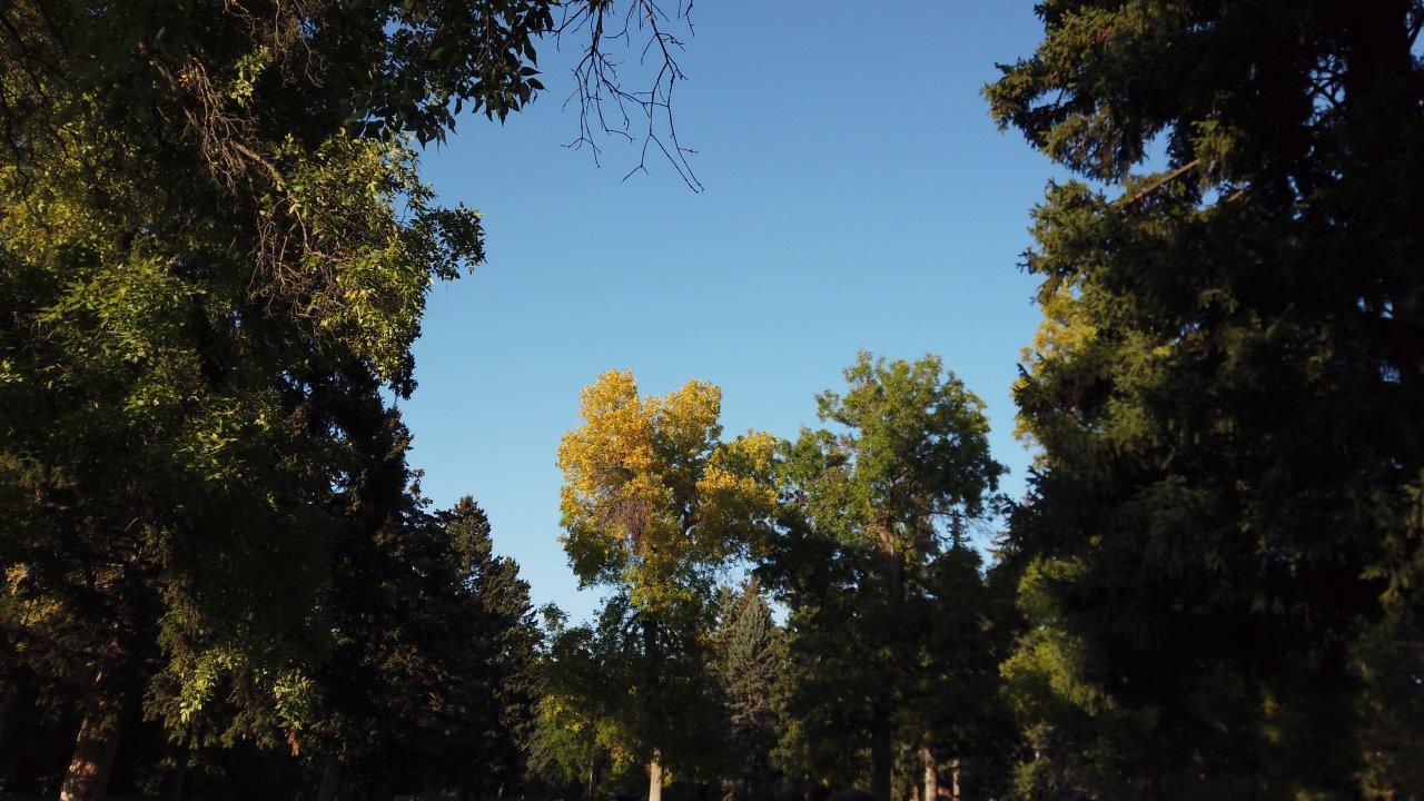 Lindley Park Fall